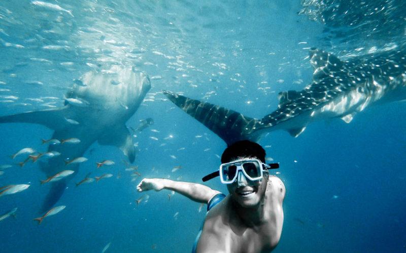 Почему не стоит бояться акул