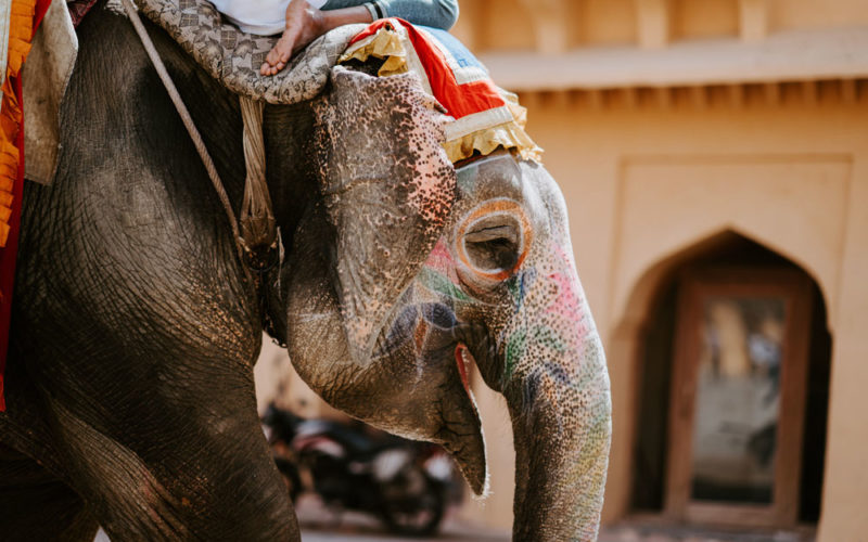 RP @Lionheart0075 #Phajaan is a method of torturing a baby elephant until they become 'tame'. For animals as emotionally sensitive as elephants, this torture is enough to damage them psychologically for life. And all so that touri… https://buff.ly/2LkQ1ST